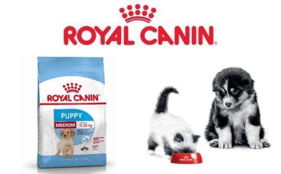 campione omaggio royal canin